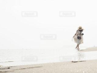 浜辺を歩いている鳥の写真・画像素材[4606478]