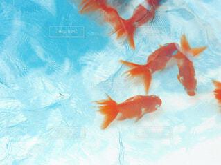 水の下で泳ぐ魚の写真・画像素材[4606489]