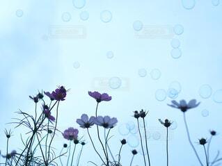 花のクローズアップの写真・画像素材[4606495]