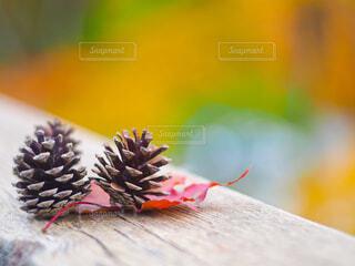 花のクローズアップの写真・画像素材[4606541]