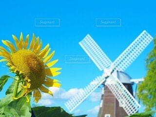 花のクローズアップの写真・画像素材[4657259]