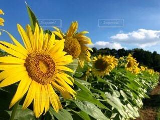 花のクローズアップの写真・画像素材[4657262]