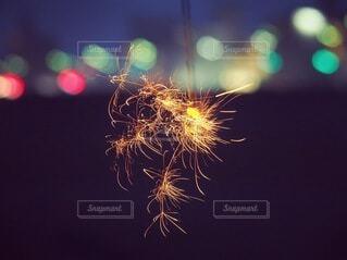 空の花火の写真・画像素材[4659861]