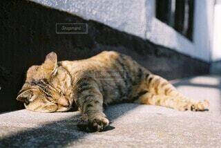 地面に横たわっている猫の写真・画像素材[4694796]