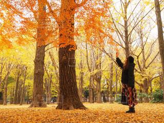 森の木の隣に立っている人の写真・画像素材[4812479]