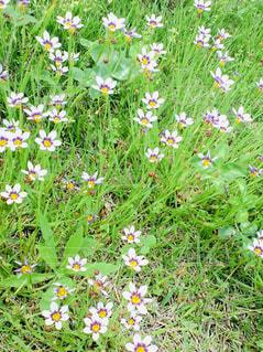 花の写真・画像素材[1951466]