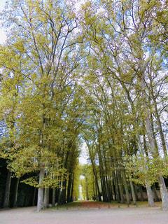 緑の中のお散歩の写真・画像素材[2067595]