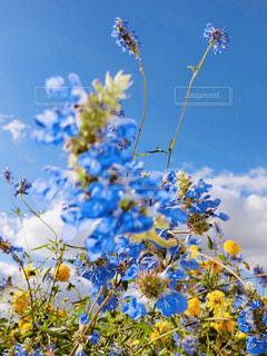 青い花の写真・画像素材[2067614]