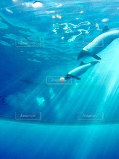 イルカの写真・画像素材[675383]