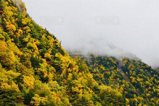 森の人々 のグループの写真・画像素材[844049]