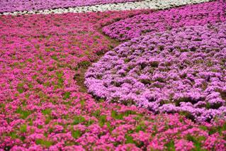 近くの花のアップ - No.844050