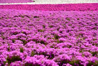 近くの花のアップの写真・画像素材[1133821]