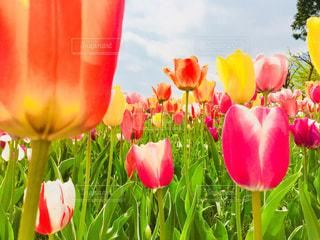 近くの花のアップの写真・画像素材[1143208]