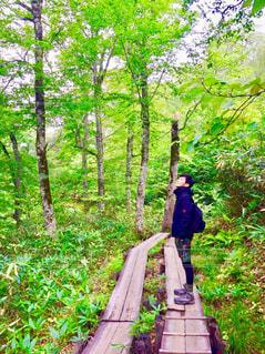 男性,森林,人物,未来,夢,ポジティブ,尾瀬,希望,目標,可能性