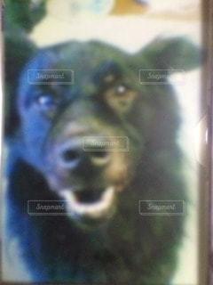 犬の写真・画像素材[78782]