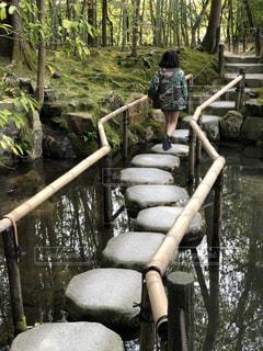 京都,庭園,後ろすがた