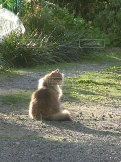 猫,自然,風景,屋外,緑,茶色,影,光,草花,ねこ,逆光,道,土,野草,景観,ネコ,ミルクティー色