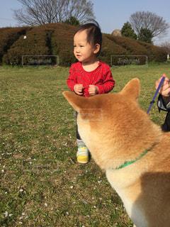 芝生,屋外,子供