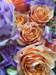 花,フラワー,バラ,オレンジ,薔薇,ベージュ,フォトジェニック,ミルクティ色