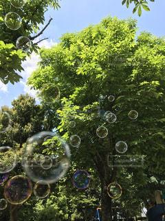 緑の光を浴びての写真・画像素材[2098091]