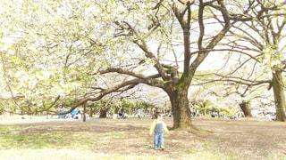 晴れた日に公園にお出かけの写真・画像素材[2262067]