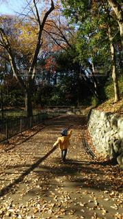晴れた日にお散歩の写真・画像素材[2262069]