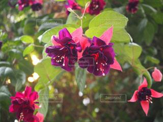 花の写真・画像素材[2011044]