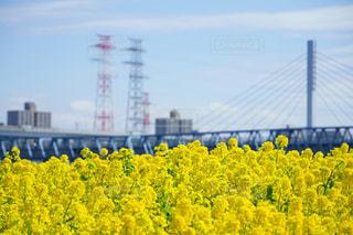 黄色の花の写真・画像素材[1142317]