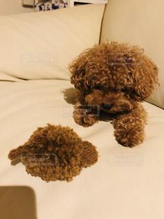 犬,茶色,キーホルダー