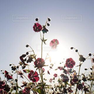 空,花,影,光,草木,インスタ映え
