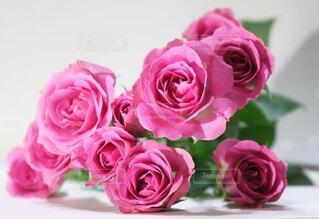 花,ケーキ,屋内,ピンク,花束,バラ,薔薇,テーブル,キャンドル,誕生日,装飾,草木,切り花