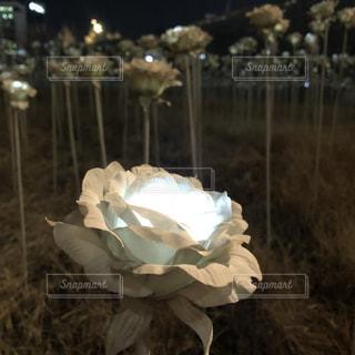 バラの心の写真・画像素材[2036565]
