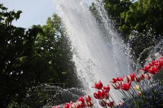 噴水とチューリップの写真・画像素材[2142734]