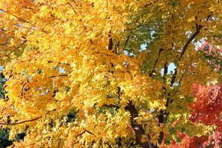 紅葉の季節の写真・画像素材[2650567]