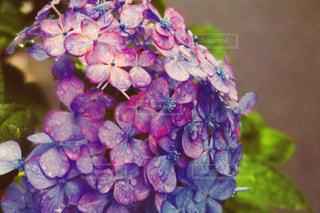 花の写真・画像素材[1971806]