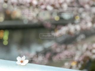 花の写真・画像素材[1974552]