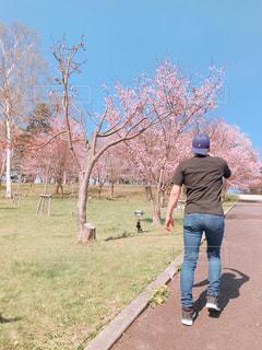 男性,空,公園,花,春,桜,カップル,屋外,ピンク,晴れ,後ろ姿,男,草,樹木,ピクニック,人物,背中,人,昼,パステル,快晴,草木,さくら,おしゃれ,背後,インスタ映え
