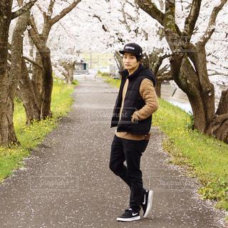 桜舞う桜道での写真・画像素材[3130762]