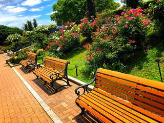 公園のベンチの上に座っている木製のベンチの行の写真・画像素材[1910663]