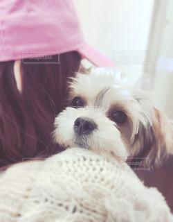 女性,家族,犬,動物,ピンク,白,ふわふわ,リラックス,癒し,可愛い,抱っこ,愛犬,キャップ,ミックス犬,ニット,mix犬