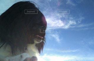 女性,20代,犬,自然,空,動物,チワワ,雲,散歩,女の子,黒髪,いぬ,カツラ,パピヨン,ミックス犬,髪の毛,わんちゃん,チワヨン