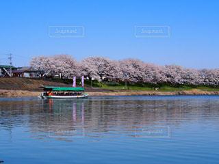 川と桜と尾形船の写真・画像素材[2022178]