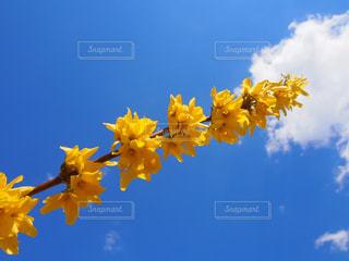 天まで届けの写真・画像素材[2022339]