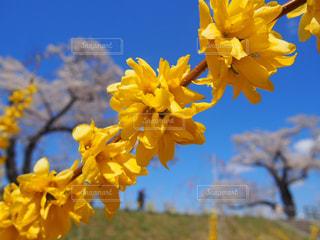 春から夏への写真・画像素材[2022365]