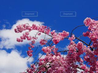 空と桜の写真・画像素材[2033295]