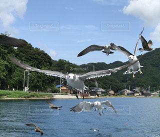 空飛ぶカモメの写真・画像素材[1940611]