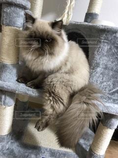 かごの中に座っている猫の写真・画像素材[2291384]