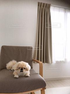 居間に座っている犬の写真・画像素材[3321194]