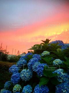 花園のクローズアップの写真・画像素材[3374479]