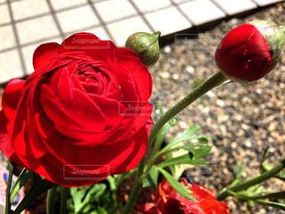 赤い花♥︎︎∗︎*゚の写真・画像素材[1987585]